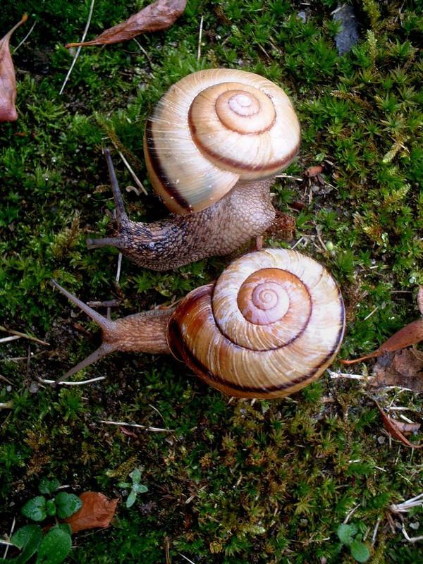 4_mirror_image_snails